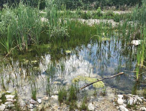 Froschreservat Klingenthal Frühling