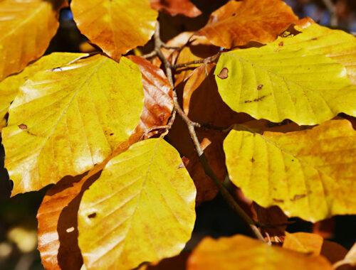 Herbstwanderung Rütihard Muttenz